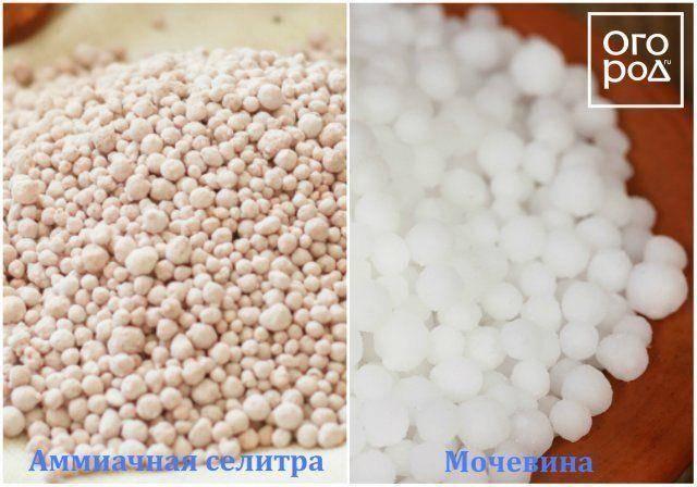 Применение кальциевой селитры для подкормки перца и правила процедуры