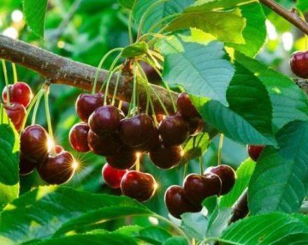 Самые вкусные рецепты ассорти из огурцов и помидоров: на любой вкус