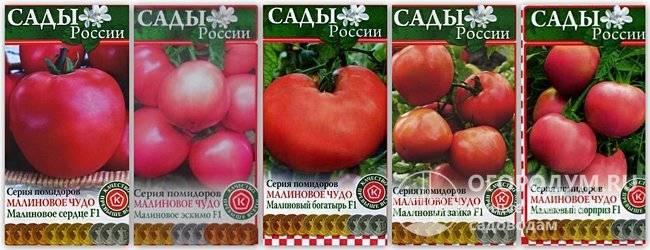 Характеристика и описание сорта томата малиновое чудо, его урожайность