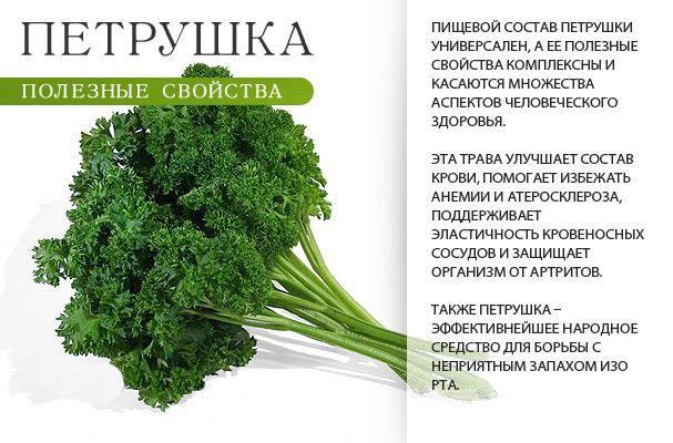 Петрушка для мужчин: какие витамины содержатся, для чего полезна, как влияет на потенцию
