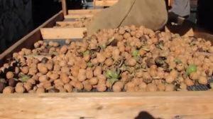 Хранение кедровых орехов в домашних условиях