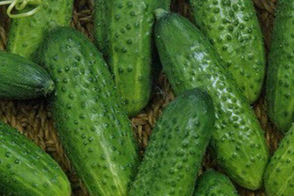 «маменькин любимчик f1»: высокоурожайный самоопыляющийся гибрид