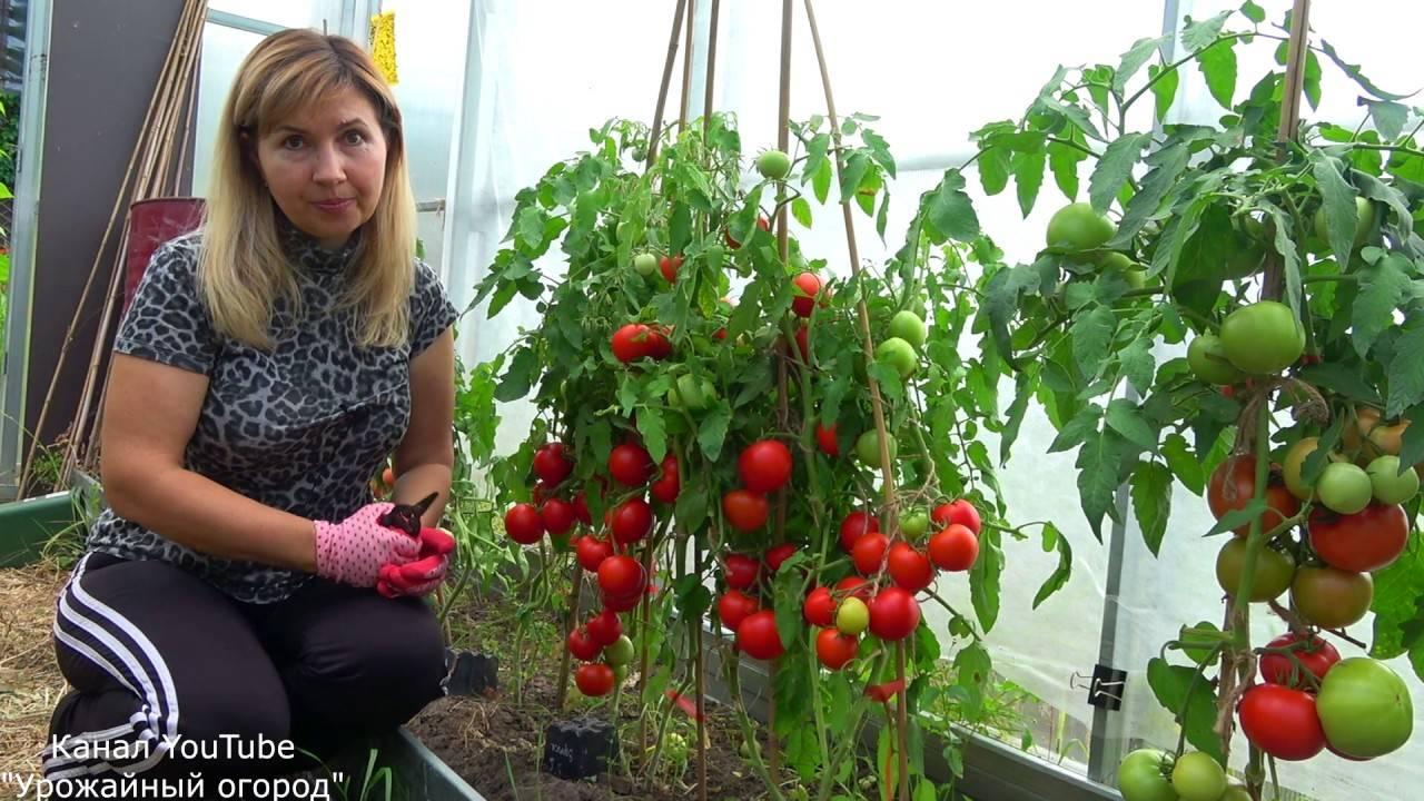 На какую глубину нужно сажать семена помидор на рассаду