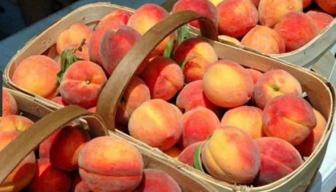 Лучшие рецепты консервированных половинками персиков