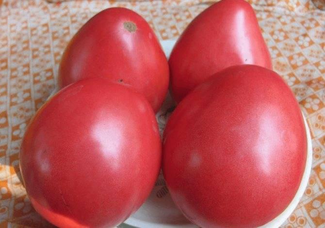 Томат красный крупный: характеристика, описание сорта, отзывы, урожайность