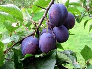 Как лечить болезни плодовых деревьев и меры профилактики