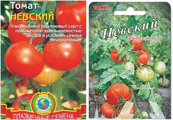 Самые неприхотливые сорта томатов с фото и описанием