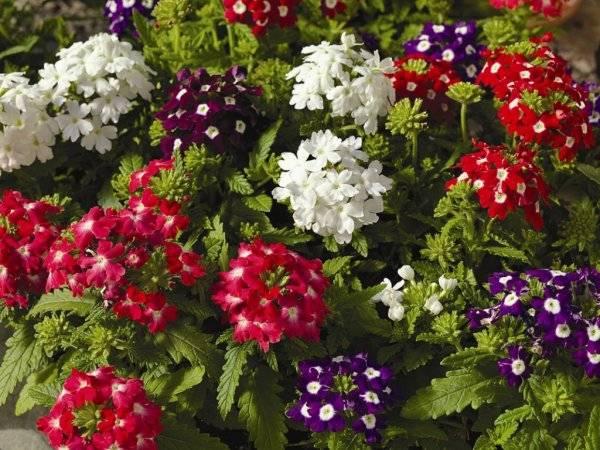 Как сохранить саженцы до ранней весны, или все просто при желании