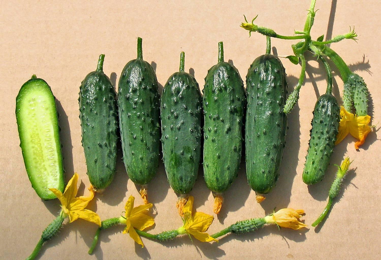 Огурец кураж f1: описание сорта корнишонов, отзывы и фото огородников