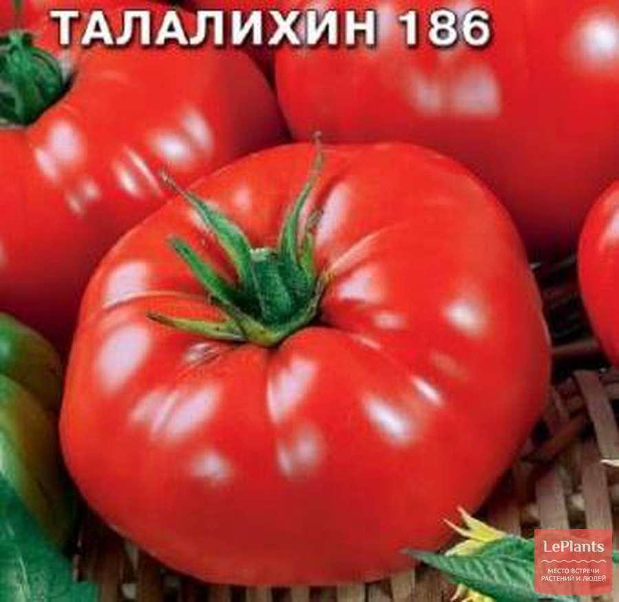 Описание сорта томата Талалихин и его характеристики