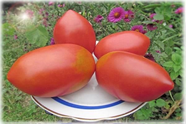 Детальное описание томата «микадо красный» — помидор с хорошим иммунитетом