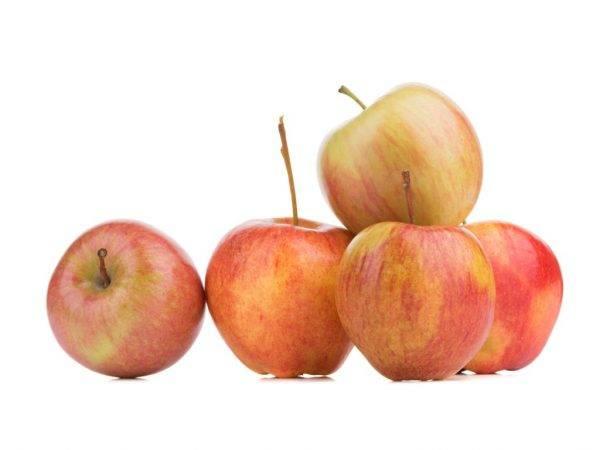 Яблоня медок: особенности сорта и ухода
