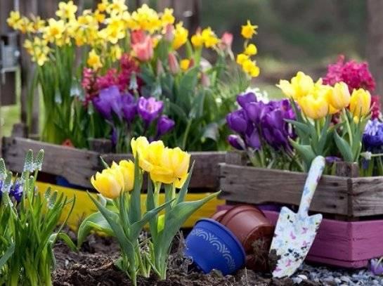 Посадка тюльпанов осенью в подмосковье: сроки и советы