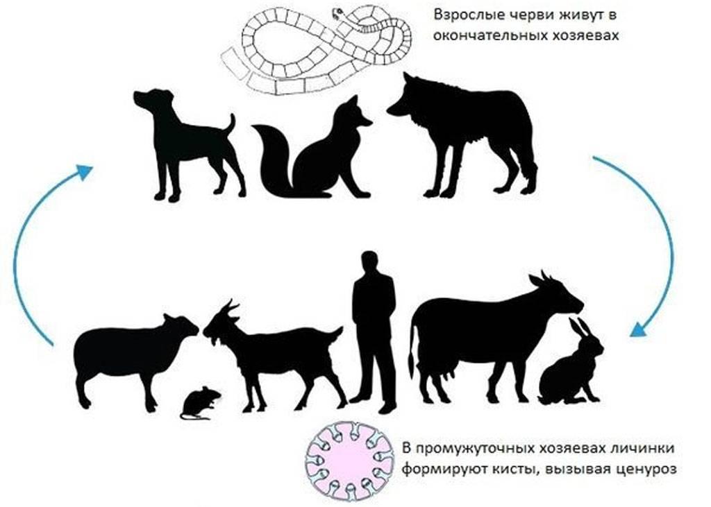 Первые симптомы и правила лечения болезней у овец