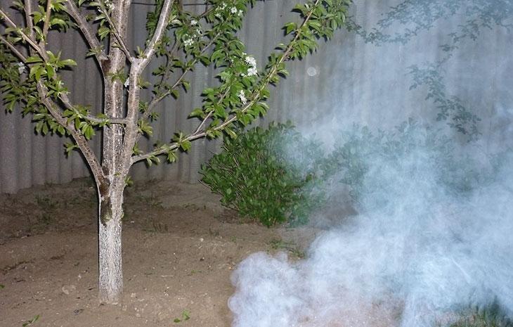 Правила применения табачной пыли для защиты огурцов