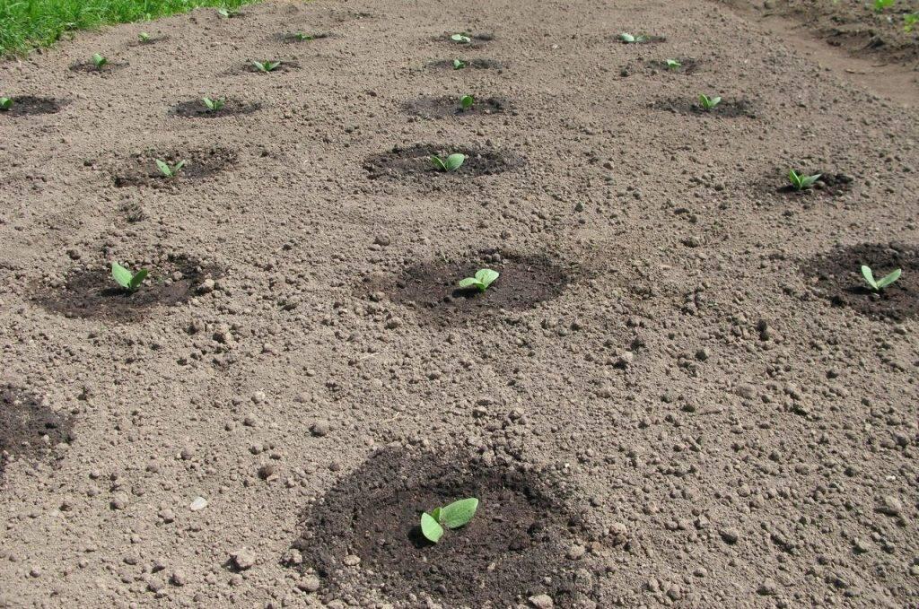 Почему в теплице не растут огурцы: 3 основные причины