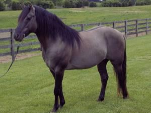 Гнедая масть лошади: описание, цвет, породы и фото