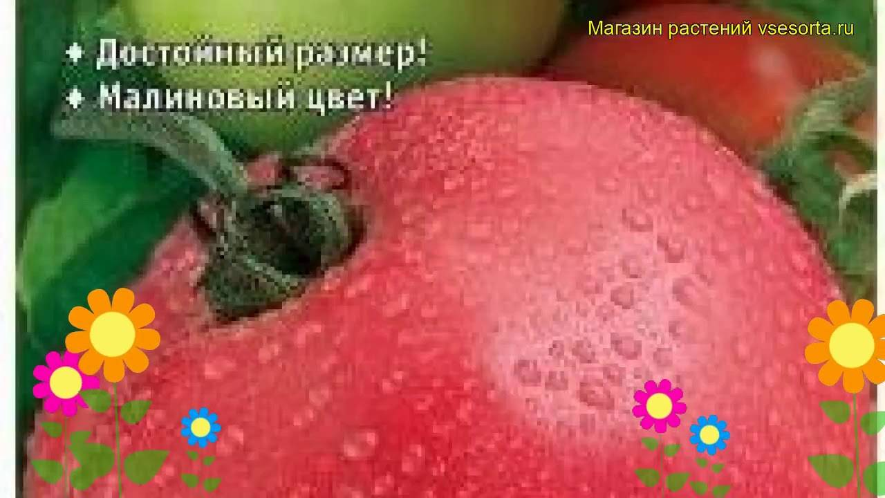 Описание сорта томата вано, его характеристика и урожайность
