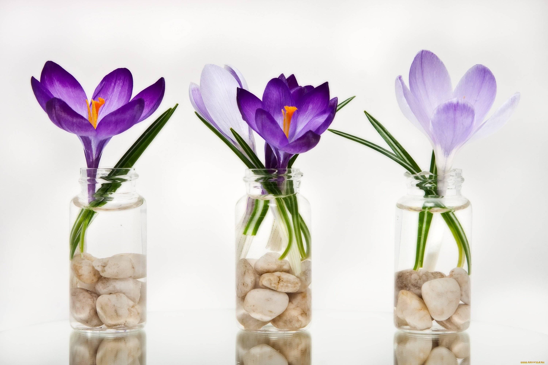Как вырастить розы на балконе и сохранить зимой до весны