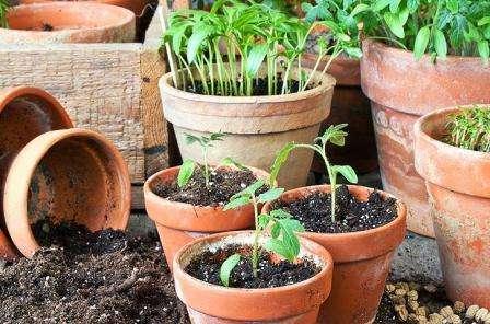 Благоприятные дни для посадки томатов на рассаду в 2020 году по лунному календарю