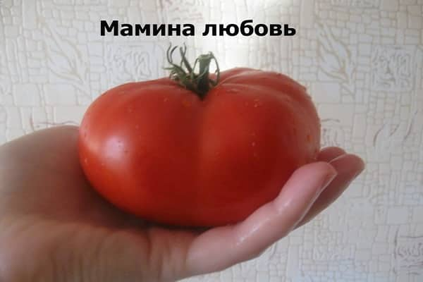 Сорт томат «розовая катя f1»: качественный урожай в течение всего сезона