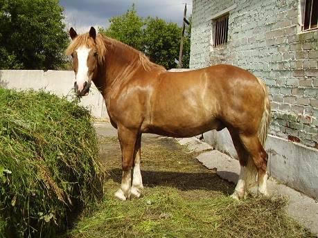 Система и способы содержания рабочих лошадей