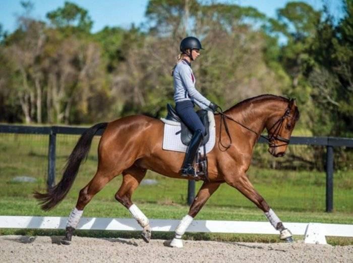 Аллюр — основные виды бега лошади