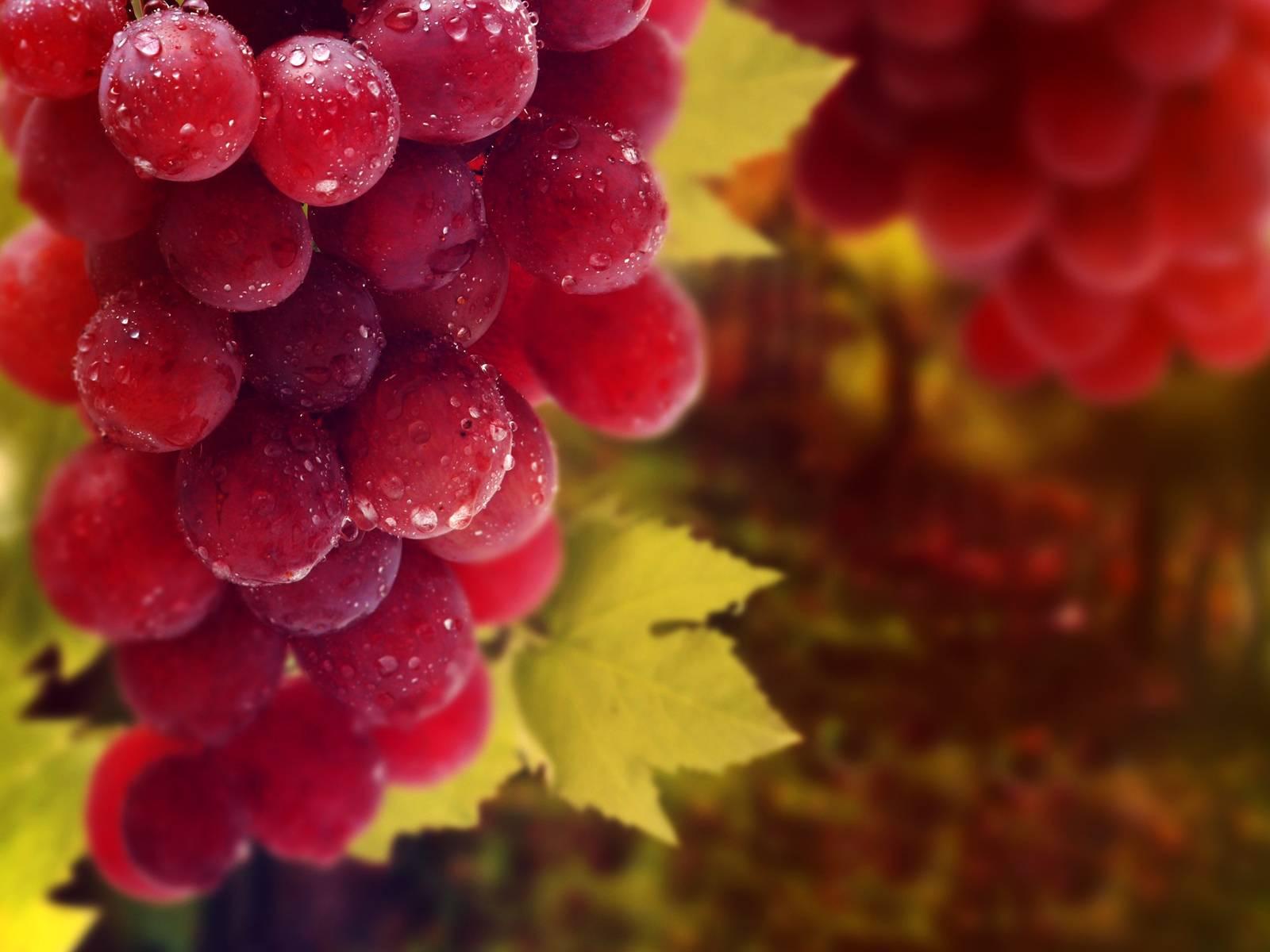 Диксон виноград описание сорта