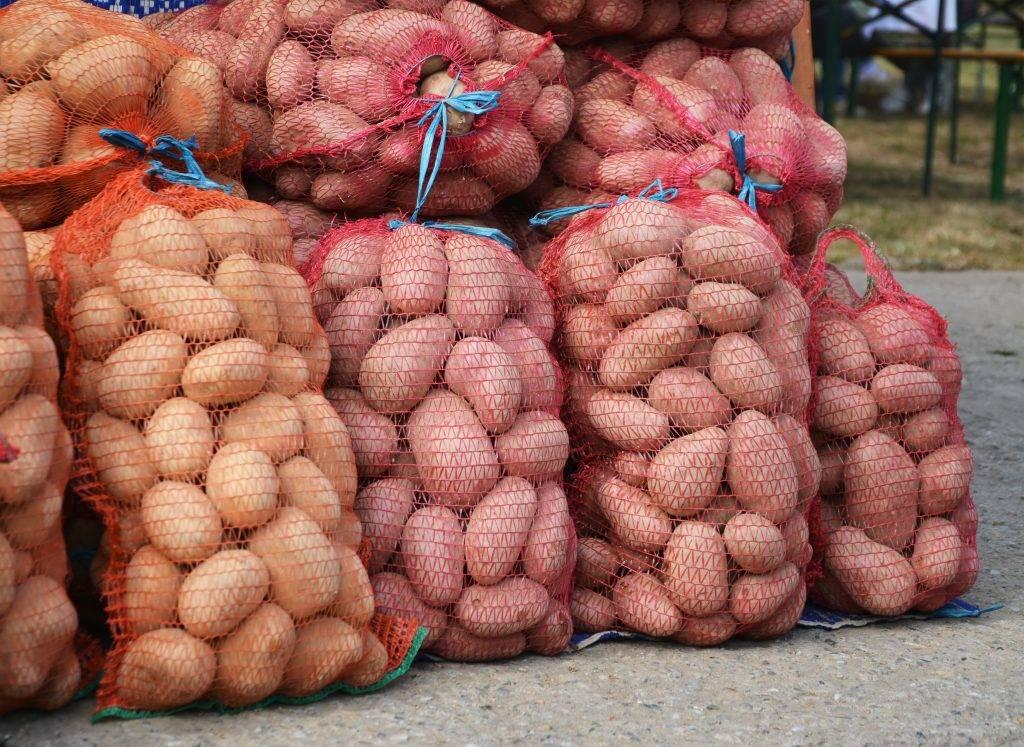 Что можно сажать после картофеля – 9 хороших вариантов и 3 неудачных