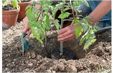 Как правильно выбрать грунт для посадки рассады овощей и цветов