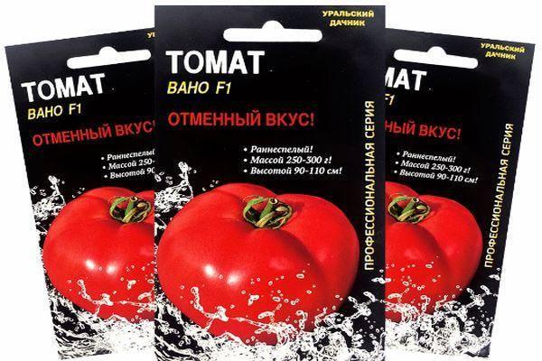 Сравнительно новый, но уже полюбившийся многим овощеводам сорт томатов «взрыв», описание, характеристики, урожайность