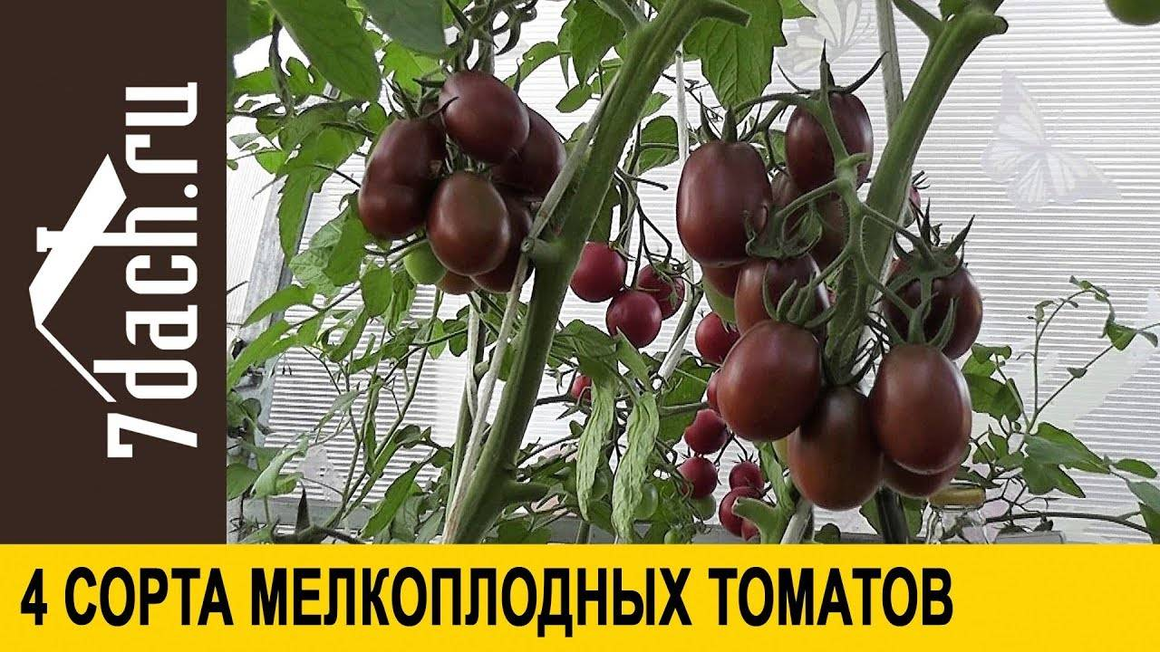 Томат ильди — описание и характеристика сорта