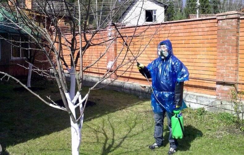 Как бороться с порослью вишни в саду и на участке, уничтожить побеги не выкорчевывая