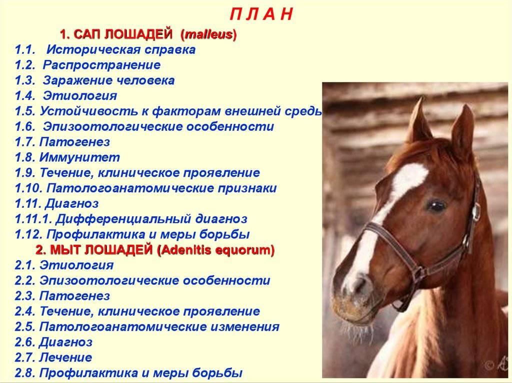 Какие болезни бывают у лошадей, методы их лечения и профилактики