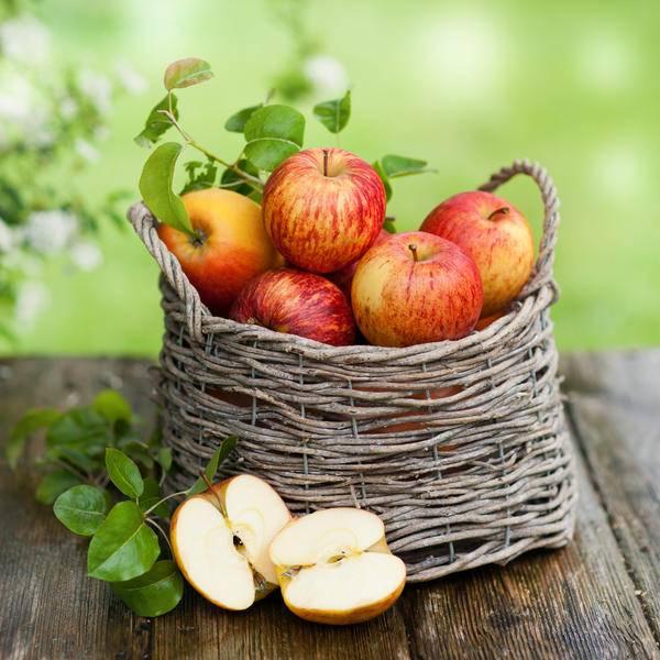 Заготовки из яблок на зиму – лучшие рецепты