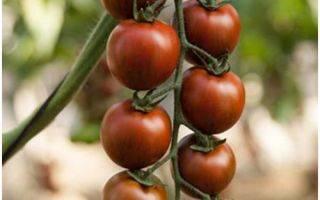 Рейтинг сортов и гибридов томатов черри, которые я выращивала
