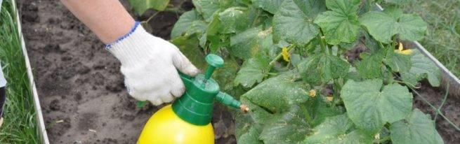 Подкормки и удобрения для огурцов: минеральные и органические, как правильно использовать