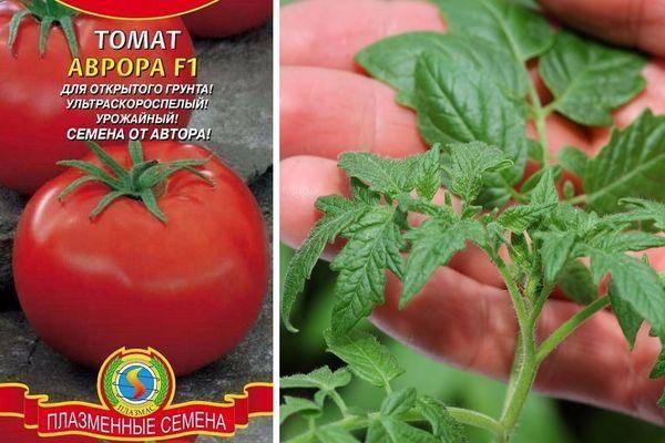 Прекрасный выбор томата для огородника-любителя — сорт «корнеевский розовый»: нарядный и полезный
