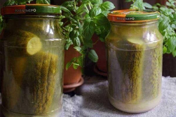 Квашеные огурцы на зиму в банках как бочковые: 6 рецептов огурцов холодным засолом (способом)