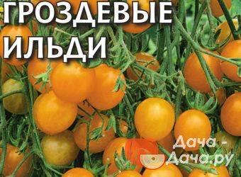 Описание томатов сорта матиас f1 и их характеристики