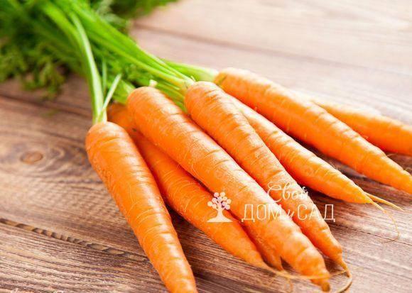 Как правильно поливать морковь в открытом грунте и подкармливать: технология и сроки