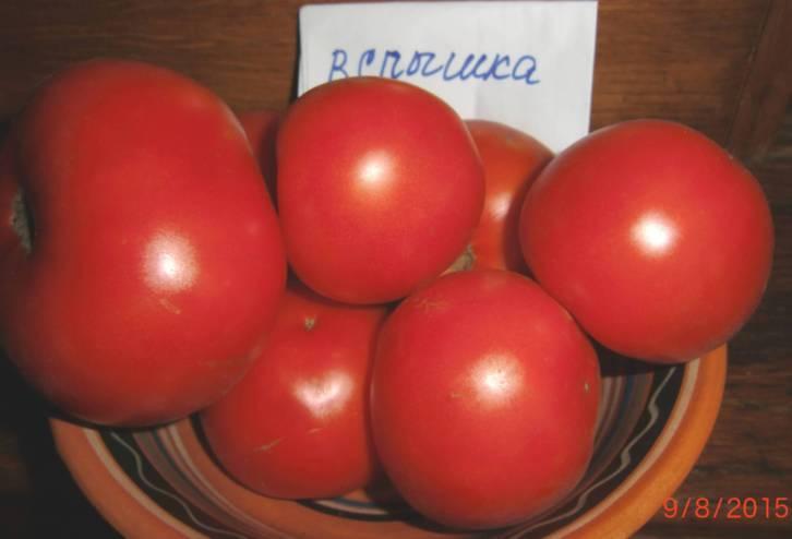 Томат вспышка — описание сорта, фото, урожайность и отзывы садоводов