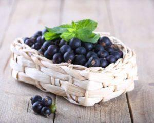 Дачница – характеристика сорта чёрной смородины и способы её выращивания