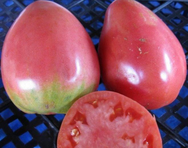Описание томата бизон желтый, культивирование в теплице и отзывы овощеводов