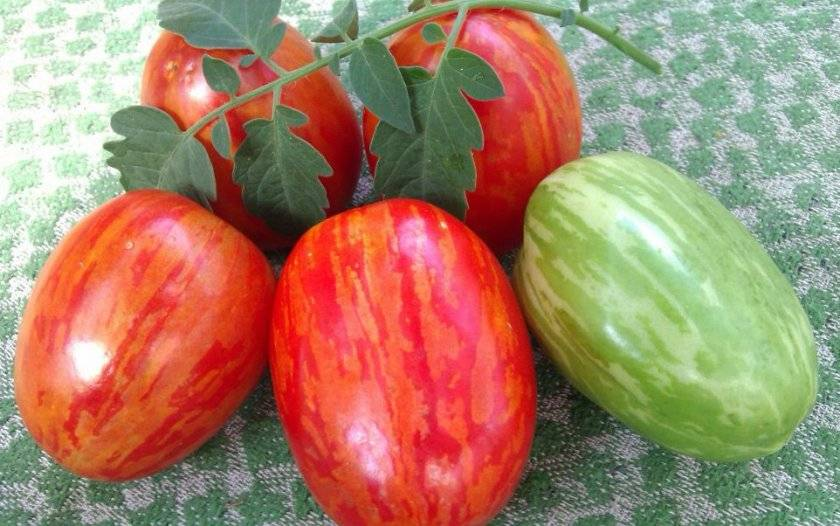 Томат пасхальное яйцо: описание сорта, характеристика, отзывы об урожайности, фото – все о помидорках