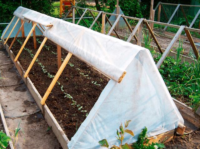 Выращивание, характеристика и описание сорта огурцов родничок