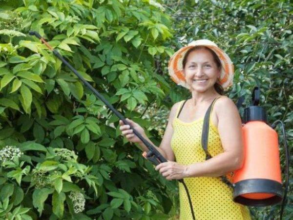 Луковая шелуха как удобрение для растений – свойства и применение