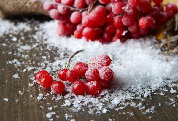 Как заготовить калину на зиму? лучшие рецепты приготовления