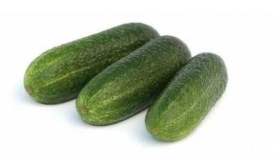 Гибрид огурцов «трилоджи f1»: фото, видео, описание, посадка, характеристика, урожайность, отзывы