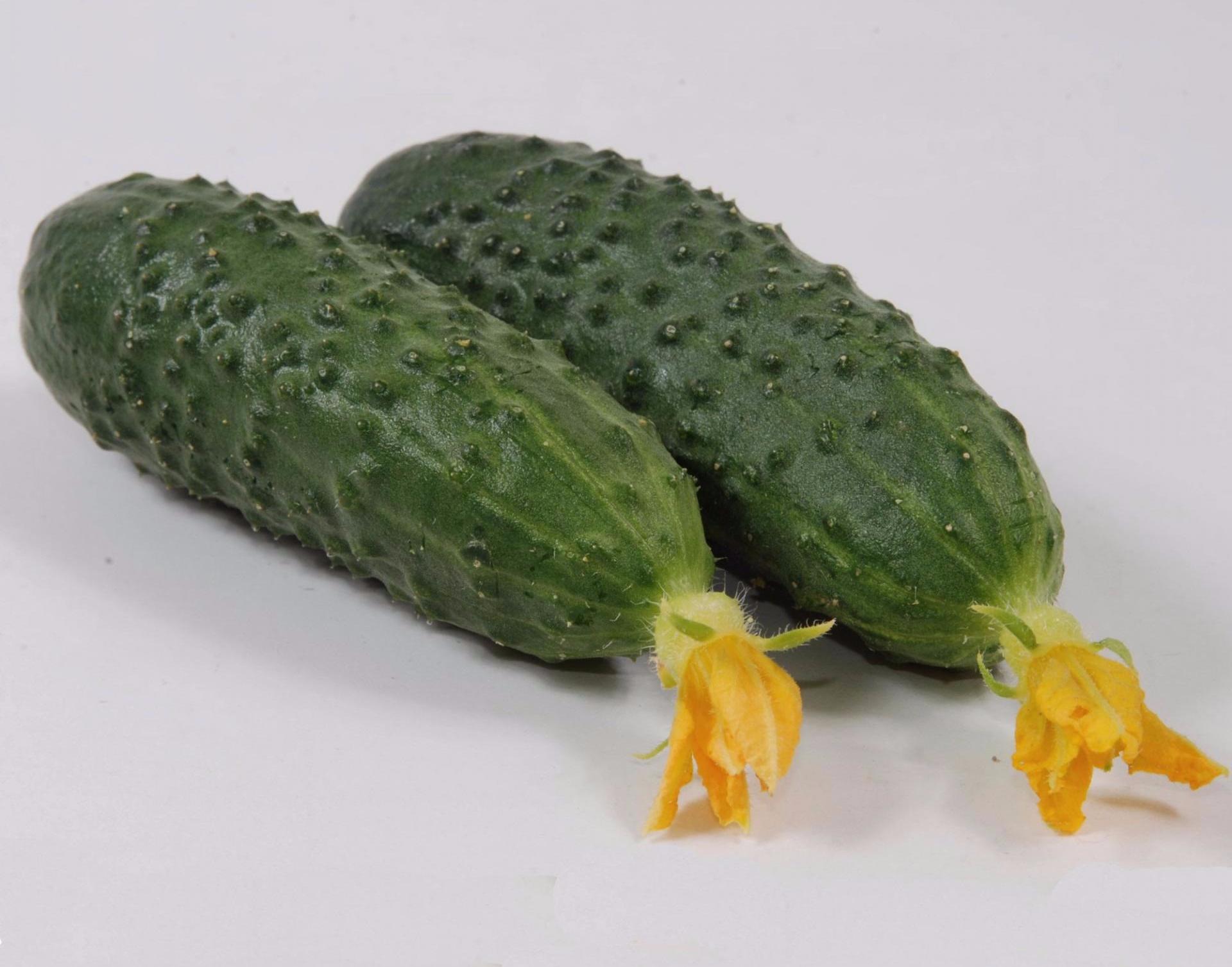 Огурец маринда f1: описание сорта и особенности выращивания